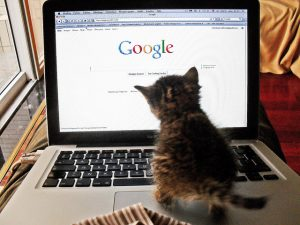 Cat trying to use Google on a laptop. Source: https://www.flickr.com/photos/tahini/5810915112